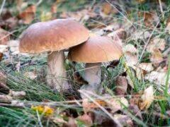 Веские причины добавить грибные блюда в рацион