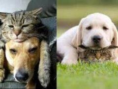Ученые доказали, что восприятие людей и собак похожи
