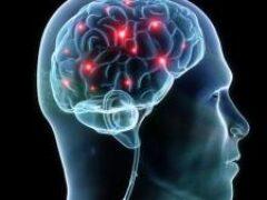 Найдено объяснение повреждению мозга при коронавирусе — медики  Источник: ladyhealth.com.ua