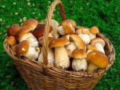 Чтобы не отравиться: собираем и готовим грибы правильно