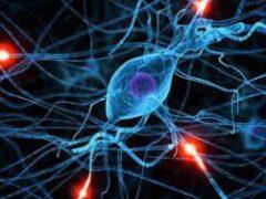 Исследование: у людей с аутизмом нейроны растут иначе