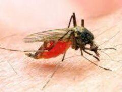 Создана первая в истории вакцина от малярии