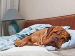 Исследователи выяснили пользу сна с собакой в одной постели