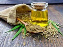 Растительные источники незаменимых жирных кислот