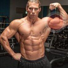 Названы лучшие упражнения для увеличения бицепса