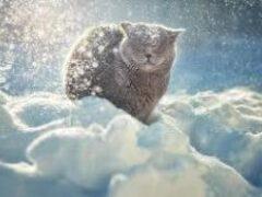 Китайские учёные выяснили, как холод влияет на смертность