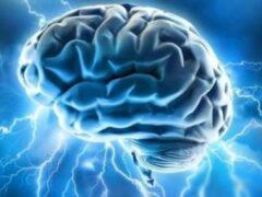 У человеческого мозга оказалась больше вычислительной мощности