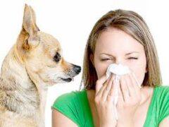 Медики назвали причины и симптомы аллергии на животных