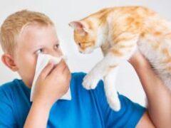 Как избежать аллергии на домашних питомцев, рассказали врачи