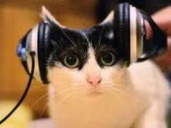 Американские ученые выяснили, какая музыка снижает стресс у кошек