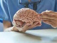 Неврологи выяснили, что фруктоза может вызывать болезнь Альцгеймера