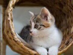 Мы ошибаемся: люди не способны понимать кошек