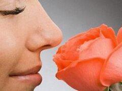 Розовый запах борется с бессонницей