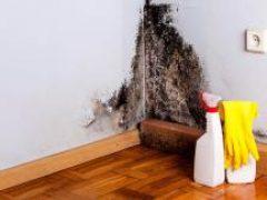 Когда грибы растут на стенах: избавляемся от плесени бюджетными способами