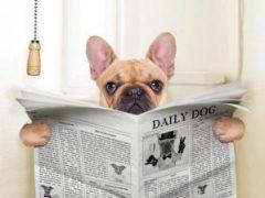 Ученые утверждают: собаки быстрее приучаются к туалету, чем люди