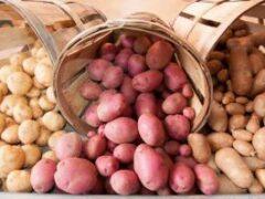 Какправильно хранить картошку вквартире