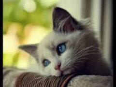 Умирающий кот заразил хозяина опасной инфекцией