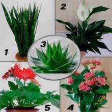4 лучших растения для детской спальни